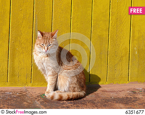 Free Redhead Cat Royalty Free Stock Photography - 6351677