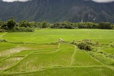 Rice Field In Laos Royalty Free Stock Photos