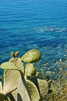 Free Mediterranean Seaview With Indian Fig Stock Photo - 6350690