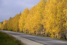 Free Autumn Road Royalty Free Stock Images - 6350859