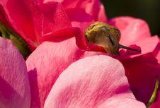 Free Snail In Flower Stock Image - 6351271