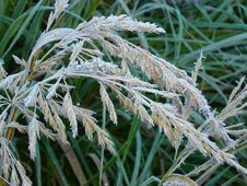 Free Grass Covered A Hoarfrost Royalty Free Stock Photos - 6351458