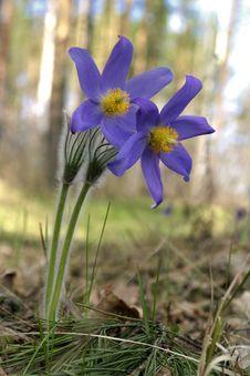 Free Snowdrop Flowers Stock Photos - 6351623