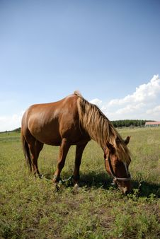 Free Horse On The Glassland Stock Photography - 6351662
