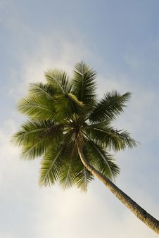 Free Tropical Palm Tree Royalty Free Stock Photography - 6352037