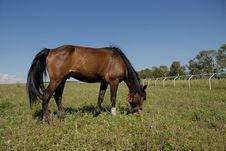 Free Horse On The Glassland Stock Images - 6352104