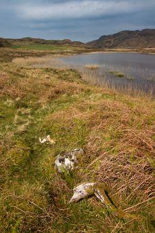 Free Lake In Scotland Royalty Free Stock Photos - 6352488