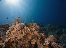Free Coral And Fish Stock Photography - 6352732