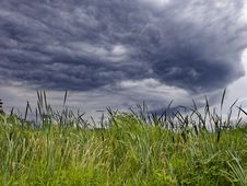 Free Cattails Under Bad Sky Royalty Free Stock Image - 6353116