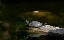 Free Turtle Laying On The Shore Royalty Free Stock Photos - 6353768