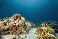 Free Coral And Fish Royalty Free Stock Images - 6354399