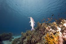 Free Coral And Fish Stock Image - 6354431