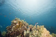 Free Coral And Fish Royalty Free Stock Image - 6354456