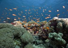 Free Coral And Fish Stock Images - 6356014