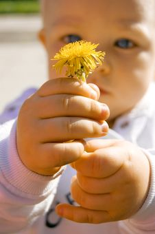 Free Boy Holding Flower Royalty Free Stock Photo - 6356855