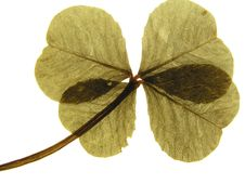 Free Four-Leaf Clover Stock Image - 6357121
