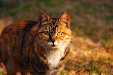 Free Cat Stock Photo - 6357170