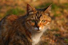 Free Cat Royalty Free Stock Photo - 6357315