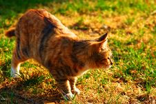 Free Cat Royalty Free Stock Photo - 6357365