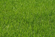 Free Pure Grass Royalty Free Stock Photos - 6357528