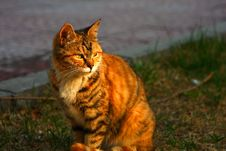 Free Cat Royalty Free Stock Photography - 6357547