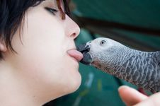 Free Young Woman Holding A Grey Parrot Royalty Free Stock Images - 6357609