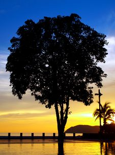 Free Tree Silhouette By Pool Royalty Free Stock Photos - 6357708