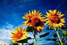 Free Dramatic Flowers Stock Photos - 6358523