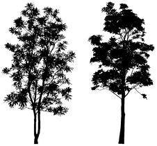 Free Trees3 Royalty Free Stock Image - 6358806