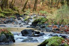 Free Stream In Autumn Stock Image - 6359551