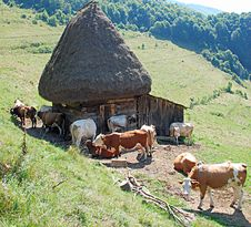 Free Cows And Cottage Stock Photography - 6359722