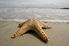 Free Starfish On The Beach Royalty Free Stock Photos - 6359998