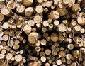 Free Woodpile Royalty Free Stock Photography - 6362567