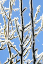 Free Icy Branches Royalty Free Stock Photo - 6369585