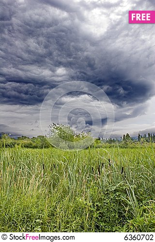 Free Cattails Under Ominous Sky Stock Photography - 6360702