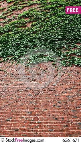 Free Brick Wall Stock Image - 6361671