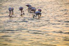 Free Flamingos.. Stock Photography - 6361102
