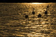 Free Flamingo In Sunset......... Stock Photography - 6361262