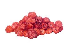 Free Raspberries Royalty Free Stock Photos - 6361488