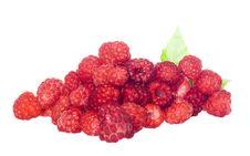 Free Raspberries Stock Photos - 6361503