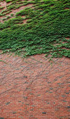 Free Brick Wall Stock Image - 6361671