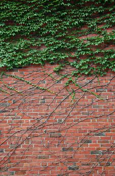 Free Brick Wall Royalty Free Stock Photos - 6361698