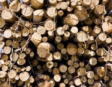 Free Woodpile Royalty Free Stock Photography - 6362567