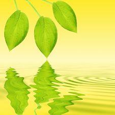 Free Hosta Leaf Beauty Stock Images - 6363214