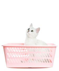 Free Adorable British Kitten Stock Photos - 6363603