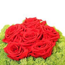 Free Roses Royalty Free Stock Image - 6364056