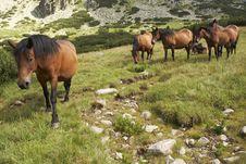 Horses In Bulgarian Mountains Royalty Free Stock Photo