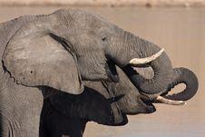 Free African Elephants Drinking Stock Photos - 6364923