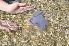 Free Jellyfish Royalty Free Stock Photos - 6365108
