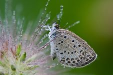 Free Butterfly With Water Drops Stock Images - 6365574